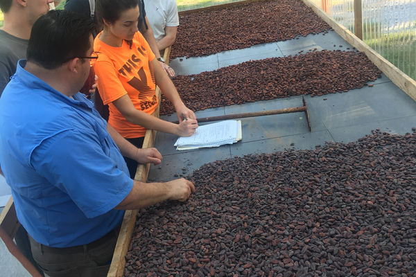 Cultivating and Commercializing Cacao for the Mayan Q'eqchi' People